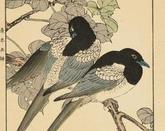 """Items similar to Japanese Antique Original Woodcut Print, Imao Keinen, """"Farfugium japonicum, Meadow Bunting"""" on Etsy Eurasian Magpie, Cypress Vine, Green Pigeon, Golden Pheasant, Barn Swallow, White Eyes, Peach Blossoms, Clematis, Woodblock Print"""