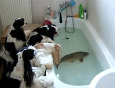 "These pups are curious about what the unusual ""house guest"" in the bathtub!"