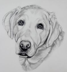 Dog Portrait // Custom drawing of your pet in by PatouPetPortraits, $75.00