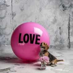 3 foot Big Love Ball with Dexter | Color : Elsa | Photo by Bob Garlick