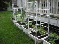PVC Tomato Cages. Tomato TrellisGarden ...