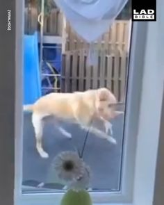 'Ever since we got this trampoline, the dog spends more time on it than the kids' 😂🐕 - Source by chantalvitt - Funny Animal Jokes, Funny Animal Pictures, Cute Funny Dogs, Cute Funny Animals, Funny Dog Videos, Cute Animal Videos, Cute Little Animals, Animals Beautiful, Dog Love