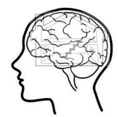 image result for brain limbic system