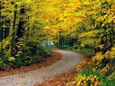 large, free cross stitch patterns of forest in autumn