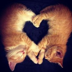 Adopt a pair of LOVE kittens!! Save two lives today. Go to www.outoftheshelter.com.