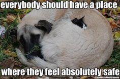 Kitten sleeping with a big dog