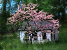 НА ЗЛАТОМ КРЫЛЕЧКЕ БЫТИЯ - Подборка разных красивых домов и ландшафтов