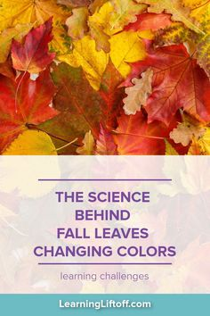 Before you start to see the fall leaves changing colors this season, find out what makes those magical autumn colors form. Everyday Activities, Autumn Activities, Green Colors, Vivid Colors, Latin Words, Deciduous Trees, Science Resources, Photosynthesis, Instagram Worthy