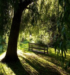 I want my children to play beneath willow trees