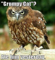 """Grumpy Cat""?"