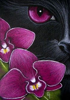 'Black Cat Behind the Magenta Dendrobium Orchid' (artwork by Cyra R. Cat Drawing, Painting & Drawing, Black Paper Drawing, Black Cat Art, Black Cats, Black Kitty, Art Projects, Illustration Art, Illustrations