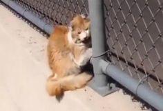 Teneri cuccioli Notizie: Un uomo salva un gatto su un' autostrada e lo adot...