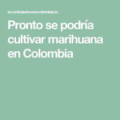 Pronto se podría cultivar marihuana en Colombia
