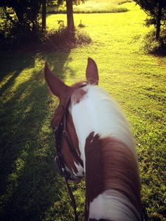 (12) Tumblr Horse Ears, Happy Trails, Horses, Animals, Animales, Animaux, Animal, Animais, Horse