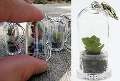 Housed in their own mini terrarium capsule, the plants grow until they fill the capsule and you can transplant them. Description from stylehive.com. I searched for this on bing.com/images