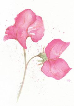 Pink Sweet Pea ---- original abstract watercolor painting. $20.00, via Etsy.