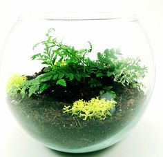 How To Build a Terrarium: Step-by-Step Guide