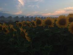 Stasera al tramonto ho allungato il giretto. Foto di @cucjanji