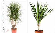 16 Plants, Plant, Planets