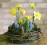 Floral arrangement for daffodils and tulips for Easter Easter Flower Arrangements, Flower Arrangement Designs, Easter Flowers, Beautiful Flower Arrangements, Tulips Flowers, Daffodils, Spring Flowers, Floral Arrangements, Church Flowers