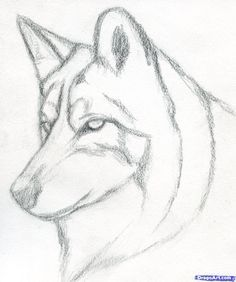 how to draw a wolf head mexican wolf step 3