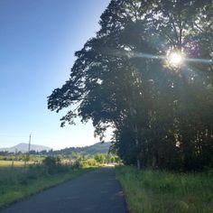 My evening walk