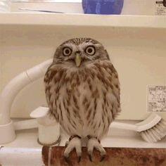 Owl wearing santa hat