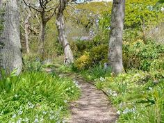 Gravelled footpath through surrounding trees | Oak Tree Cottage - Grove Cottages, Instow, near Barnstaple