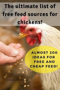 The ultimate list of free chicken feed resources. How to feed your chickens for free or very cheaply. Almost 200 ideas for saving money on chicken feed as told by homesteaders all over the web. by angie What To Feed Chickens, Best Egg Laying Chickens, Raising Backyard Chickens, Urban Chickens, Keeping Chickens, Free Chickens, Raising Meat Chickens, Chicken Swing, Chicken Garden