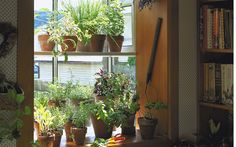 How to Keep Your Plants Watered While on Vacation