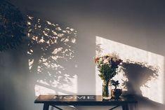 Brunch da Fabi // shadow play photography warm and cozy aesthetics Shadow Photography, Nature Photography, Photography Ideas, Photography Flowers, Photography Lighting, Aesthetics Tumblr, Foto Blog, Shadow Play, Morning Light