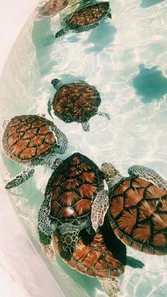 # tortugas - # - cute animals - Home Tier Wallpaper, Dog Wallpaper, Cute Baby Animals, Animals And Pets, Funny Animals, Animals Planet, Cute Creatures, Beautiful Creatures, Tortoises