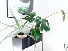 ferm LIVING Plant Box: Powder coated metal box that is slim enough to fit in so many spaces. Plant Box, Metal Box, Aquaponics, New Room, Aloe Vera, House Plants, Greenery, Flowers, Garden Walls