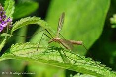 A good portion of the United States is getting rain, along with rain comes pesky mosquitoes. Check out these great, natural ways to keep the skeeters from ruining your outdoor fun Insect Repellent Plants, Mosquito Repelling Plants, Insect Pest, Water Garden, Lawn And Garden, Home And Garden, Garden Insects, Garden Pests, Organic Gardening