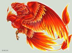 55 Ideas For Phoenix Bird Drawing Art Harry Potter Phoenix Artwork, Phoenix Drawing, Phoenix Images, Phoenix Bird Tattoos, Phoenix Tattoo Design, Bird Drawings, Animal Drawings, Drawing Animals, Back Tattoo