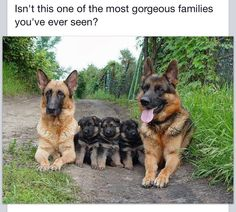 Yes it a sweet family