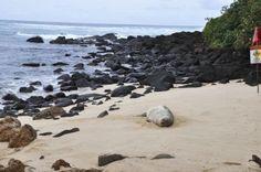 Great day to sleep on the beach. #pinHawaii