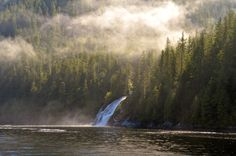 The Great Bear Rainforest Forests, British Columbia, Waterfalls, Mists, Acre, Vancouver, Stretches, Salmon, Coastal