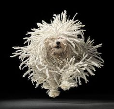 Dog photography by Tim Flach