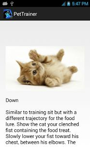 Pet Trainer, Training Your Dog, Your Pet, Trainers, Dog Cat, Pets, Animals, Don't Care, Tennis