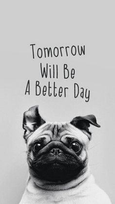 pug- tomorrow will be a better day.not my pic found it looking up pug pics… Pug Wallpaper, Wallpaper Free, Iphone 5s Wallpaper, Iphone Wallpapers, Iphone Pics, Cute Wallpaper For Phone, Amazing Animals, Cute Animals, Emoticons