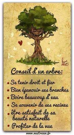 cool Citation - Et vous, quel arbre êtes-vous* ? ...