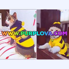 8 Best Cat And Dog Lovely Dress Images In 2019 Dogs Pet