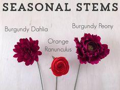 Seasonal-Stems-2.jpg