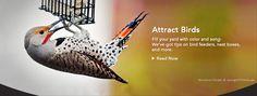 http://www.birds.cornell.edu/Page.aspx?pid=1478#_ga=1.162142074.715988074.1430230419  attracting birds