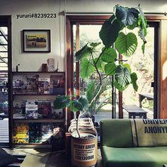 ベルメゾンのソファカバー/ベルメゾン/DIY/絵本棚/ウンベラータ/本棚…などのインテリア実例 - 2014-10-23 15:32:07 | RoomClip(ルームクリップ)