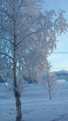 Winter 2015 in Alaska Living In Alaska, Snow, Winter, Outdoor, Winter Time, Outdoors, Outdoor Games, The Great Outdoors, Eyes