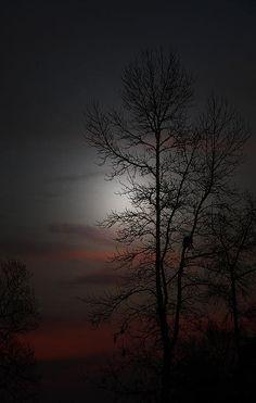 """""""Last Light"""" by Ella Char    http://fineartamerica.com/featured/last-light-ella-char.html"""