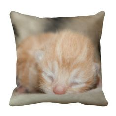 Cute Baby Cat - Sleeping Newborn Kitten - Throw Pillow - decor, for the home, interior design