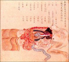 [閲覧注意]江戸時代に書かれた日本画調の人体の解剖図や骨格図いろいろ - 日本の接骨医学・骨格学の祖といわれる各務文献(かがみぶんけん)の書から。1800年に女性の死刑囚の解剖を行った記録。